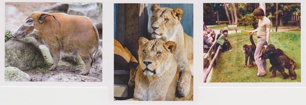 Tierische_Momente_Sticker